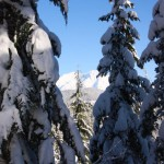 Lower Yurt Trail